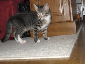 Molly 10/2008