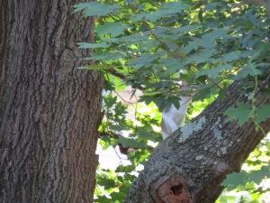 Cat Stalking the Squirrel
