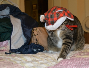 Molly Loves Her New Hat ..NOT!