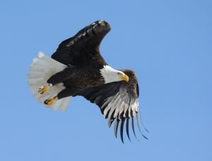 Orange A/4 Eagle