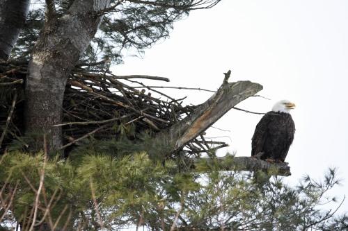 DSC_4694 Nest